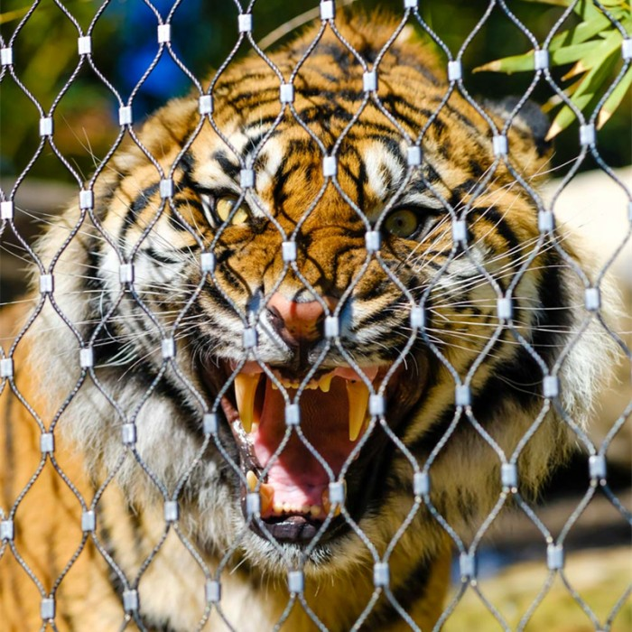 Stainless steel zoo mesh for tiger