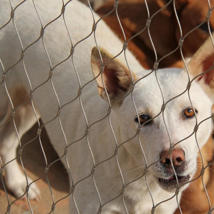 Stainless Steel Animal Enclosure Netting