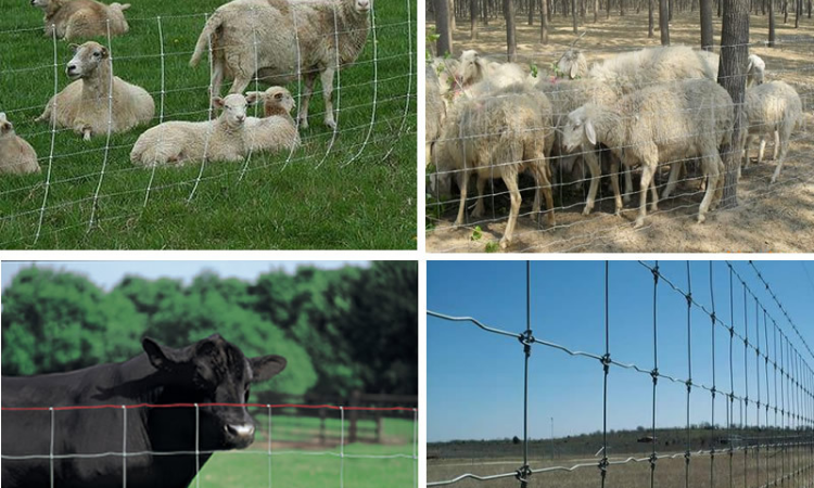 farm sheep wire mesh fencing